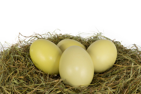 rhea: Rhea eggs in hay Stock Photo