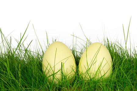 rhea: Rhea eggs in a meadow Stock Photo