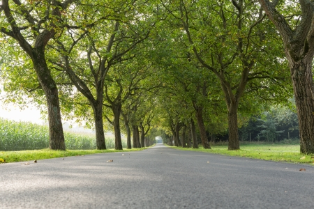 vanishing: An avenue of walnuts, vanishing point Stock Photo