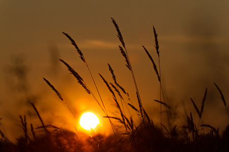 atmospheric: An atmospheric sundown, wheat in the foreground Stock Photo