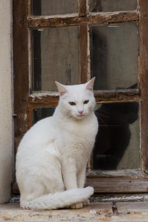 A white cat on a windowsill photo