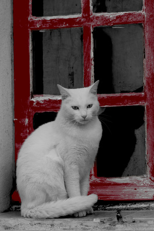 extracted: A white cat on a windowsill