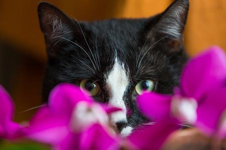 fondo blanco y negro: Un gato blanco negro detr�s de las flores de colores Foto de archivo