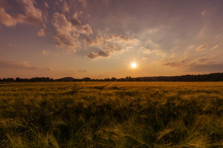 Korn: A grain field in the light of the sundown in summer Stock Photo