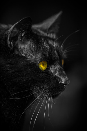Portrait of a black cat Stock Photo