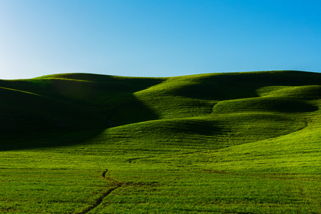 green meadows: green meadows of Tuscany hills