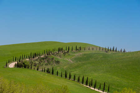 green meadows: Several cypresses in the horizon on green meadows of Tuscany hills