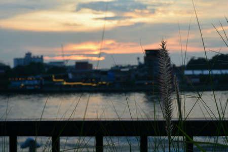 fence: Sunset .