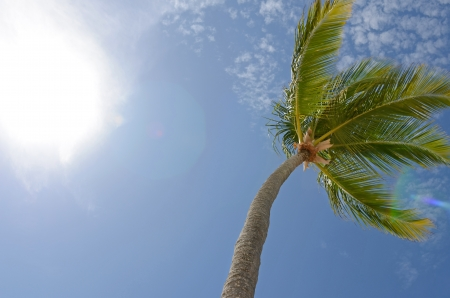 to sway: Palm Sway in Sun Stock Photo