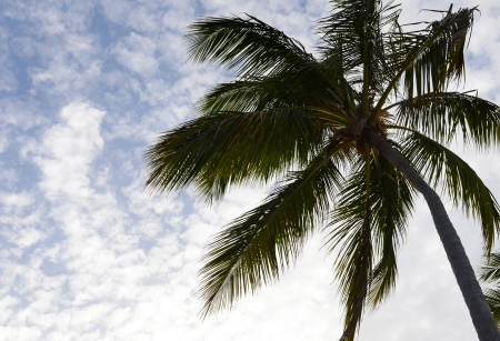 all weather: Palm Tree  Stock Photo