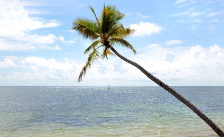 Beach Palm Tree photo