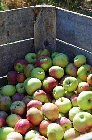 bushel: Apple Crate Corner