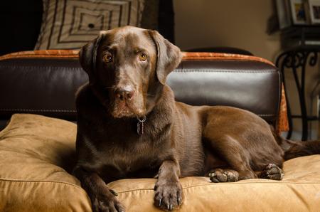 Nizza Pet Dog Archivio Fotografico - 30799294
