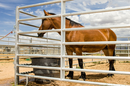 fenced in: Beautiful Brown Horse in stables