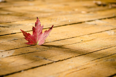 micro climate: Red leaf outside