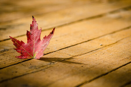 micro climate: Red Leaf