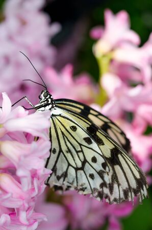 Pink and pretty butterfly