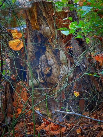 colorful wood hollow closeup photo