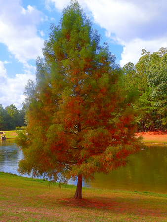 Green-reddish tree