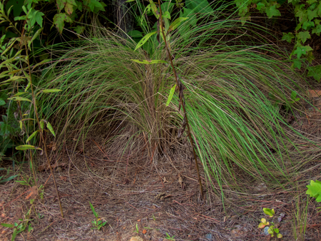 A toupee bush in the forest
