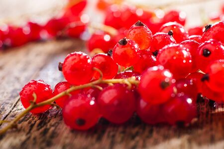 currants: Fresh red currants