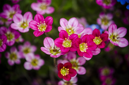 tiny pink flowers photo