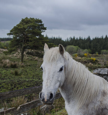 farmlife: white horse in rural setting
