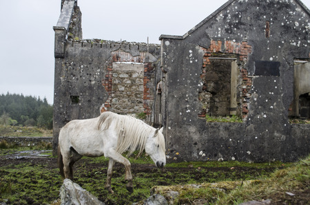 farmlife: white horse among ruins