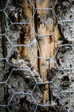 protected tree: tree bark protected with chicken wire