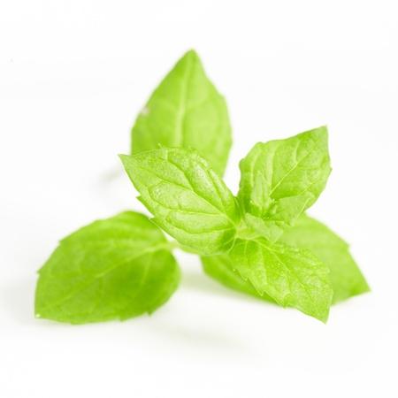 Fresh mint close up on white photo