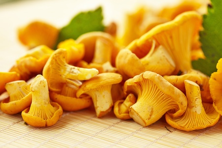 chanterelle: chanterelle mushrooms Stock Photo