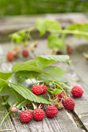 brambleberry: Wild raspberry Stock Photo