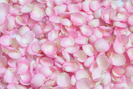 Pink rose petals. Background