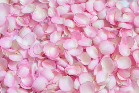 Pink rose petals. Background