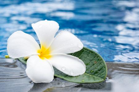 Plumeria flowers frangipani near a water pool