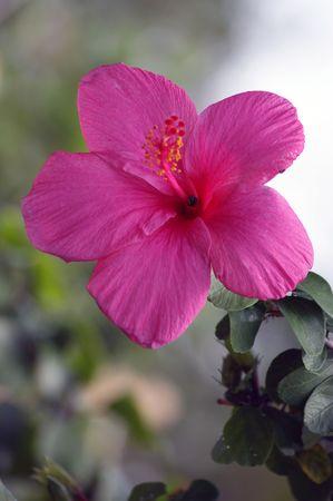 Exotic flowers of Borneo photo