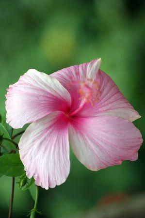 flores exoticas: Flores ex�ticas de Borneo