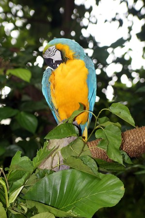 The big parrots living in the Singapore zoo. photo