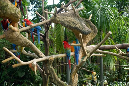 Parrots living freely in tropical forest in Park of birds. Singapore.  photo