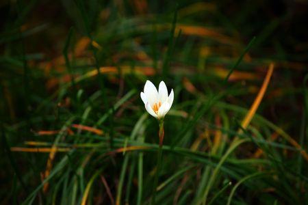 Wild flowers of high-mountainous Borneo. The paradise fallen asleep butterflies.