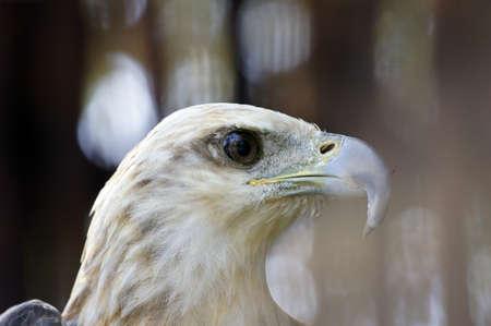 Wild eagles living at coast of paradise island Penang. Stock Photo - 8634438