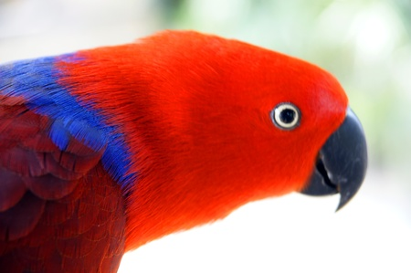 Parrots living in forest in paradise island Penang. Stock Photo