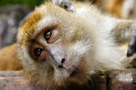 Monkeys frolic on freedom in island Langkawi jungle photo