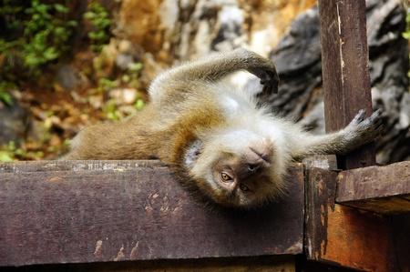 Monkeys frolic on freedom in island Langkawi jungle