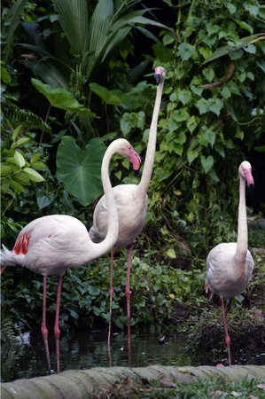 everglades national park: Pink flamingos Stock Photo