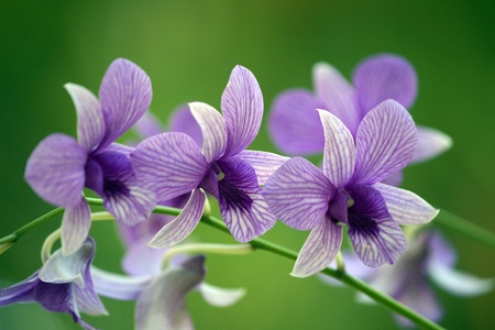 Wild orchids of highmountainous Borneo. The paradise butterflies. Stock Photo