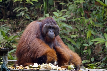 Orang Stock Photo - 10886498