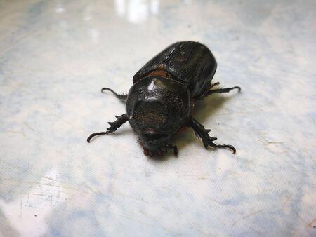 Baby Weevil in garden Stock Photo