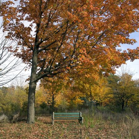 Solitary bench in autumn park