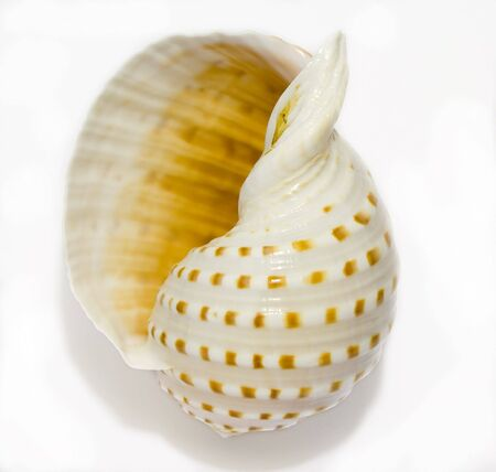 sea life centre: Nautilus Seashell isolated on white background